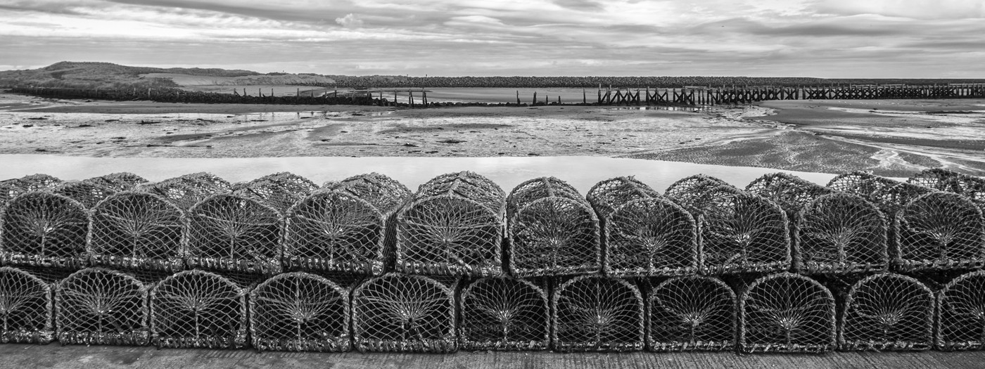 All lined up for the Lobsters by Elaine Smith